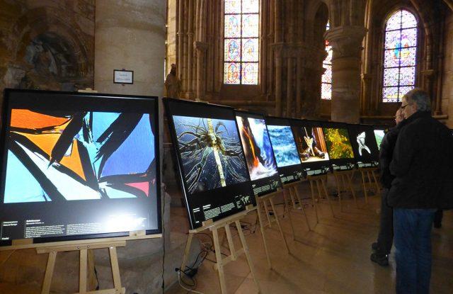 Découvrir le Festival International de la Photo Animalière et de Nature à Montier-en-Der