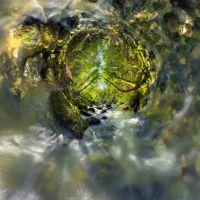 Images de nature revisitée - Patrick JACQUET