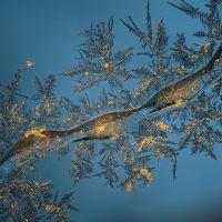 Graphisme et forme et matière de la nature - Sandor ZSILA
