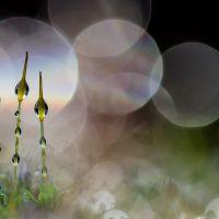 Plantes sauvages de pleine nature - Eddy REMY