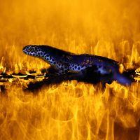 Autres animaux sauvage de pleine nature - Jonathan LHOIR