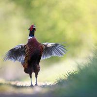 Oiseaux sauvages de pleine nature - Jérôme MOUTRILLE