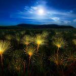 Plantes sauvages de pleine nature
