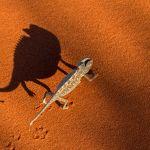 Autres animaux sauvages de pleine nature