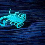 Héléne VITZTHUM - Le Scorpion