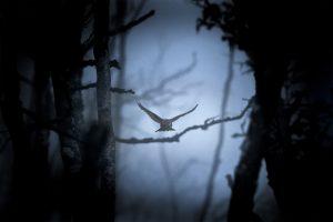 Au crépuscule - Guillaume Bily