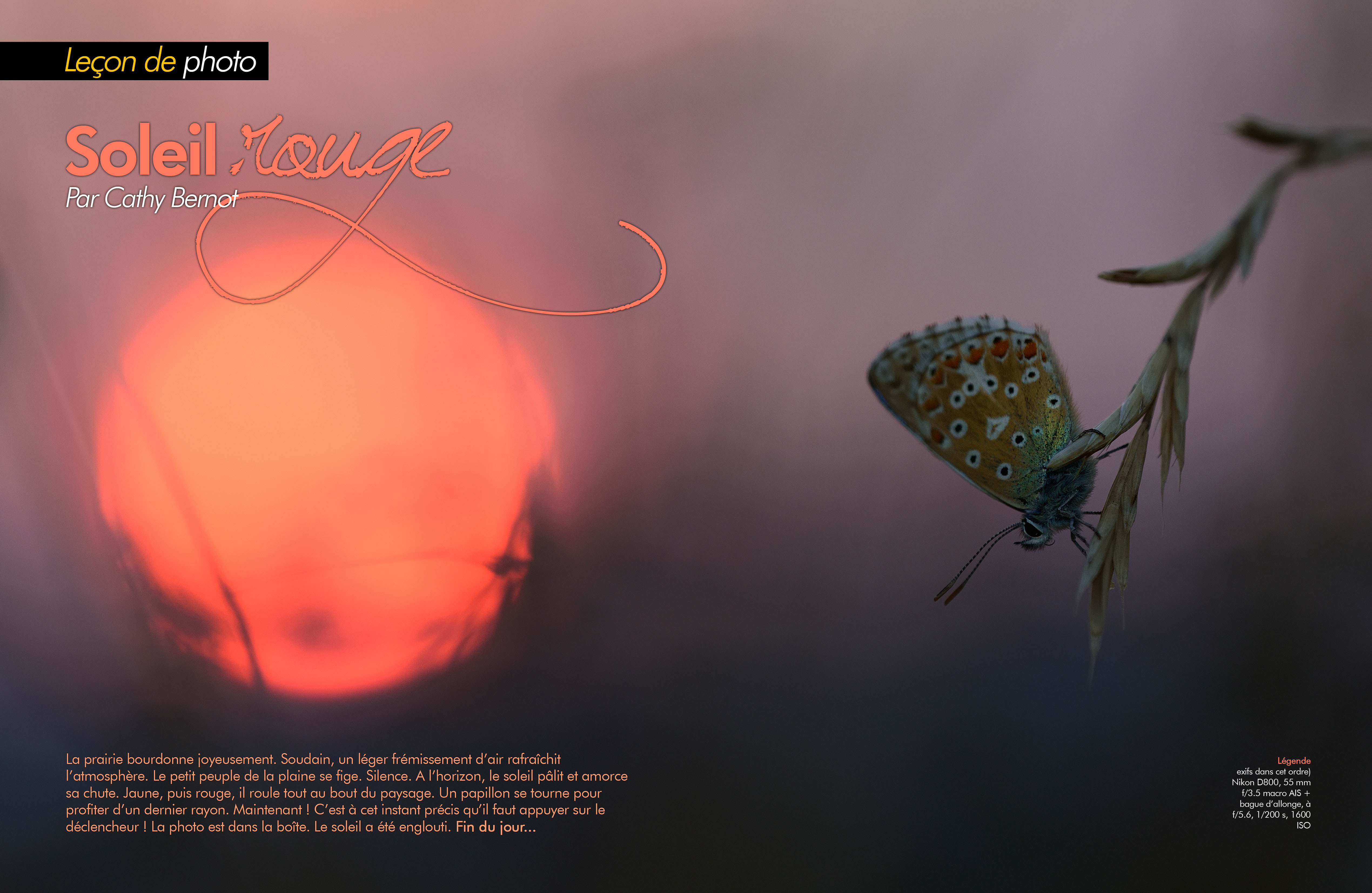 Lumière rouge - Macrophotographie au soleil couchant