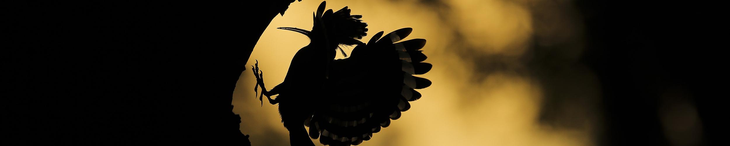 Teddy Bracard - Oiseaux sauvages de pleine nature