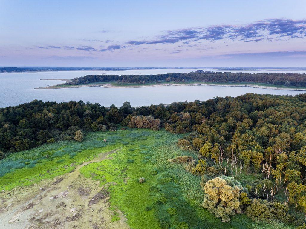 Lac du Der, histoires d'arbres - Pascal Bourguignon