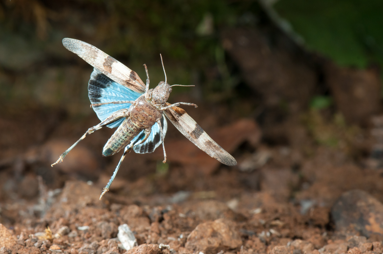 ETE ; le saut de l'oedipode - Stéphane Vitzthum