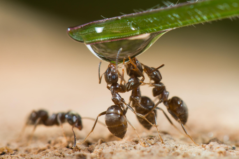 PRINTEMPS ; les fourmis ont soif - Stéphane Vitzthum