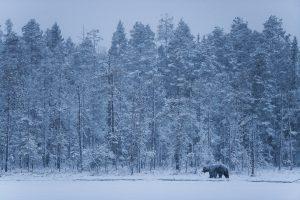 Estampe finlandaise - Thomas Roger