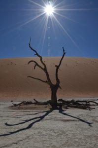 Dead Vlei désert du Namib - Namibie - Patrick Baudin