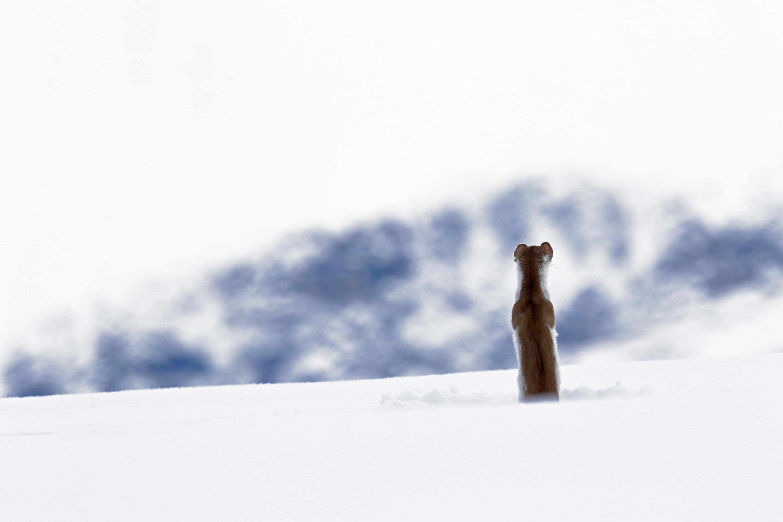 Zen attitude - Denis Girard - www.declic-nature.com
