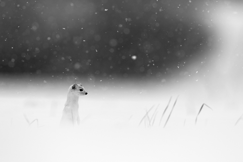 Douceur hivernale - Denis Girard - www.declic-nature.com