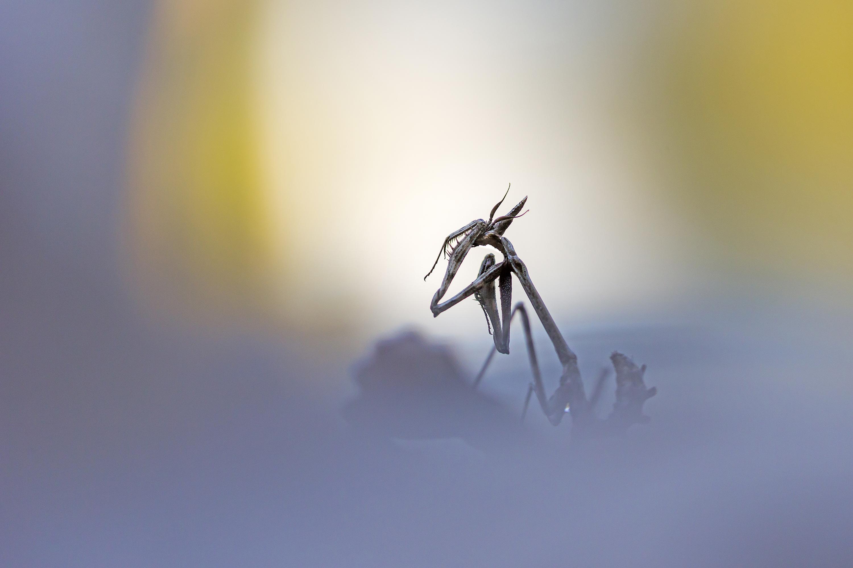 Pensive dans la solitude - David Gaultier