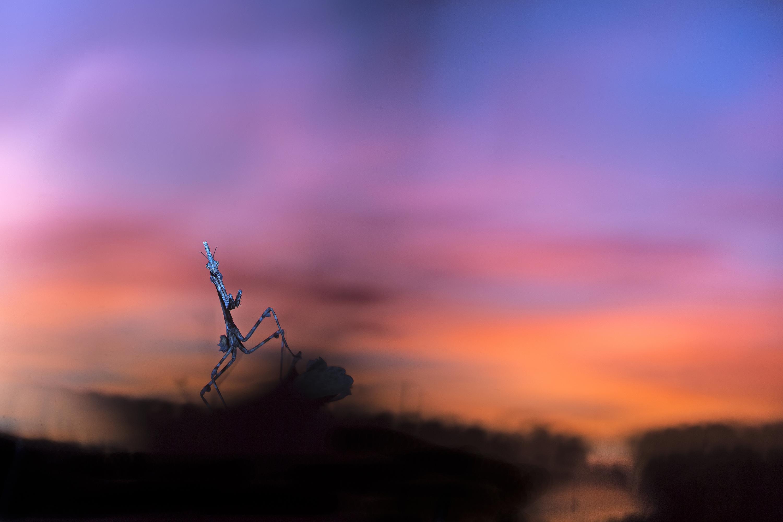 La fin d'un jour - David Gaultier