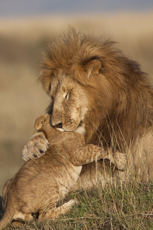 Lion : comment réduire nos transports au silence - Sabine Bernert