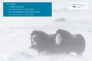 Dovrefjell - Norvège - Patrick delieutraz