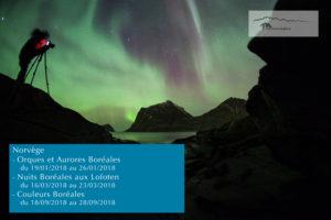 Aurores Boréales - Norvège - sylvain dussans