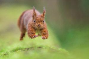 Run to the hills - DAVY Nicolas