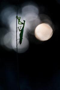Pleine lune - DAVY Nicolas