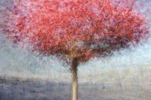 « Le plus grand « Le plus grand arbre est né d'une graine menue » - Lao-Tseu - Olivier Mühlhoff