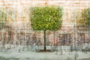 « L'arbre cubique » - Olivier Mühlhoff