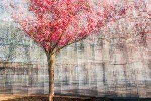 « Chaque goutte de sève contient la plénitude de l'arbre entier » - Maharishi Mahesh Yogi - Olivier Mühlhoff