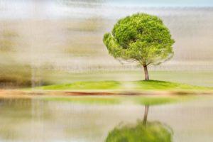 « L'arbre devient solide sous le vent » - Sénèque - Olivier Mühlhoff