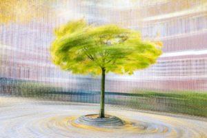 « L'arbre, comme l'homme, s'affine en société » - Henry Bordeaux - Olivier Mühlhoff