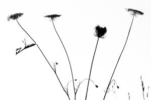 Le diablotin - Jonathan Lhoir