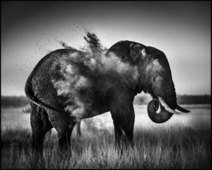 Le bon tuyau des éléphants - Laurent Baheux