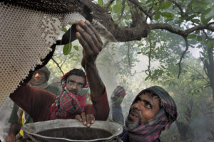 L'or des Sundarbans - Xavier Desmier