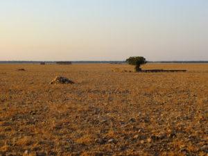 Le coussoul, paysage de la grande steppe. - Alain SCHALL