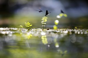 RESERVE NATURELLE REGIONALE DU RIED DE SELESTAT-ILL*WALD - Jonathan Lhoir