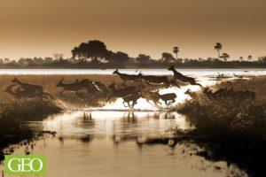 Antilopes, delta de l'Okavango, Botswana - ©Thierry Suzan