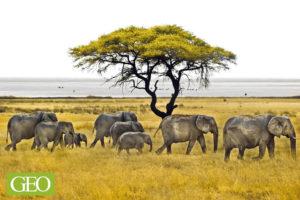 Eléphants, parc national d'Etosha, Namibie. - ©Thierry Suzan