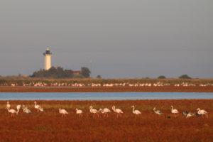 Le phare de La Gacholle. RNN de Camargue - Silke Befeld. SNPN - RNN de Camargue