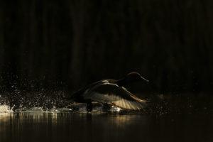 Les ailes de l'ombre - Teddy Bracard