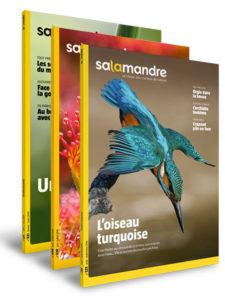 Revue Salamandre - Salamandre