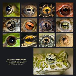 Les beaux yeux des Amphibiens - André SIMON & Stéphane VITZTHUM