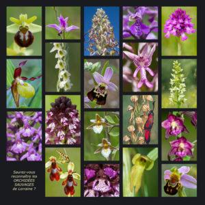 Biodiversité des Orchidées - André SIMON & Stéphane VITZTHUM