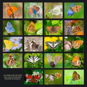 Papillons de jour - Stéphane VITZTHUM