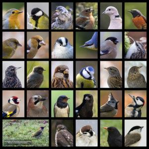 Portrait d'Oiseaux des jardins - André SIMON