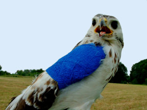 buse variable avec bandage - Dominique CRICKBOOM