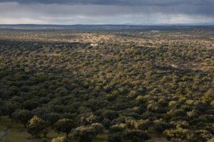 Dehesa typique - Turismo Extremadura