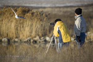 Birdwatching Escursia - Istock