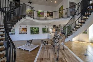 Expo Museum d'histoire Naturelle du Havre - Jean-Marc COURTIER
