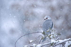 Sous la neige - Grégory ODEMER
